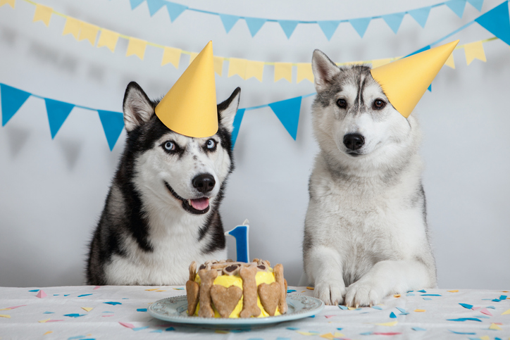 dog birthday food
